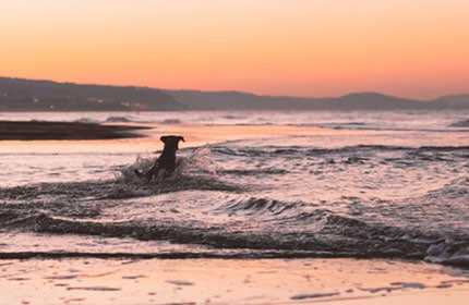 luxury dog friendly cottages cornwall